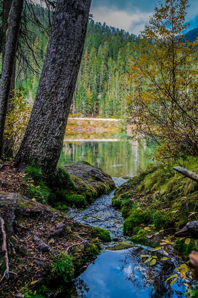 Olive Lake Feeder Spring